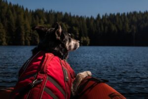 dog-kayaking